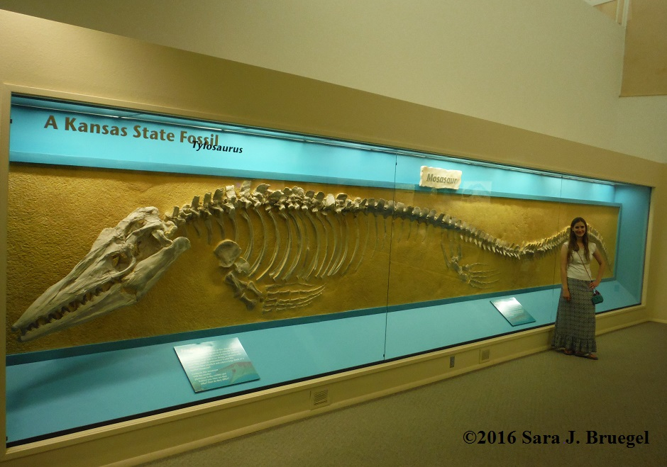 Tylosaur (type of mosasaur) fossil in the Sternberg Museum in Hays, KS, with Sara Bruegel